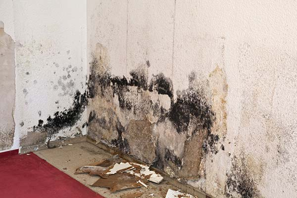 moldy wall damage
