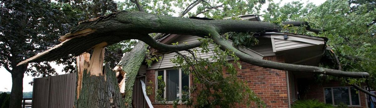 storm tree that damaged house